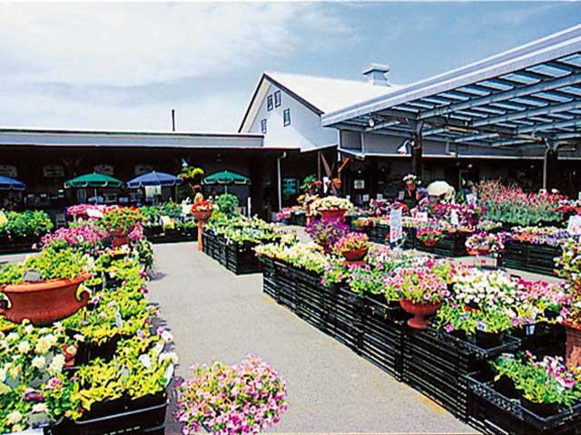 なばなの里・花市場