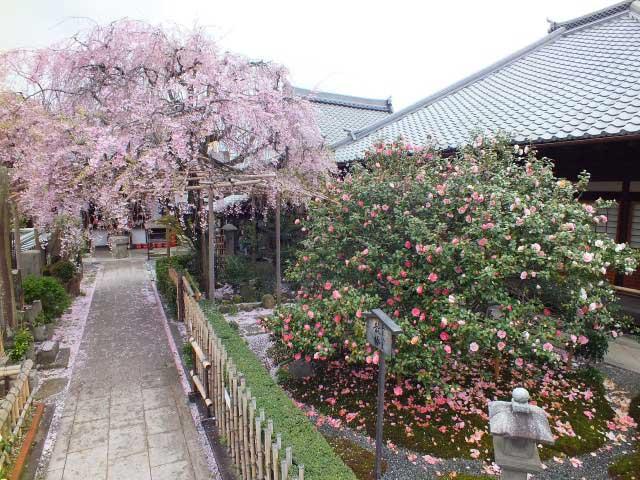 地蔵院(椿寺)