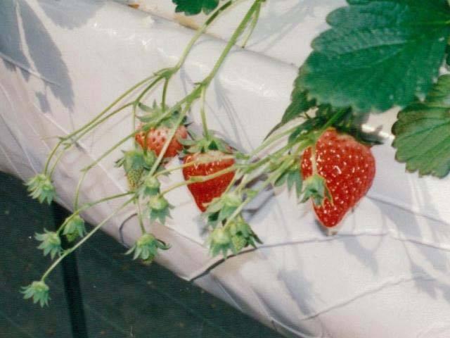 モモタ農園