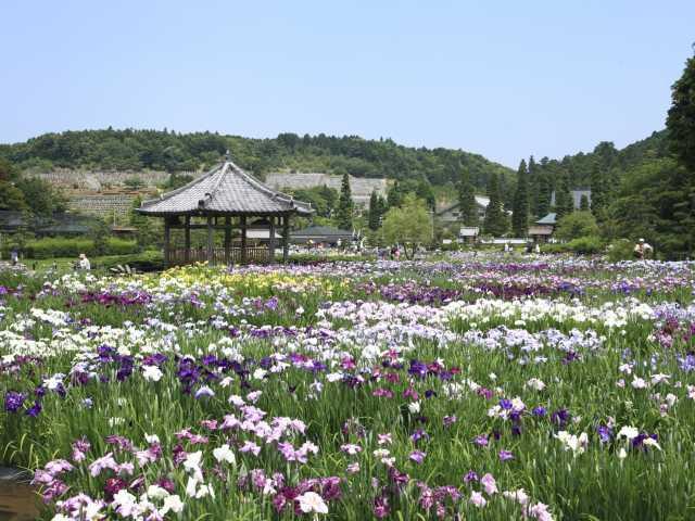 永沢寺・花しょうぶ園/ぼたん園