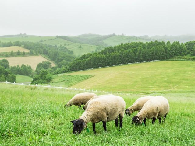 羊と雲の丘 世界のめん羊館