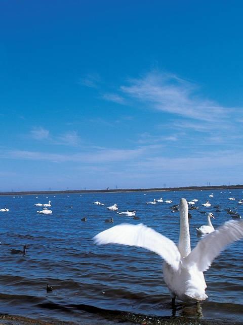 日本野鳥の会 ウトナイ湖サンクチュアリ