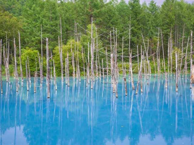 美瑛白金 青い池