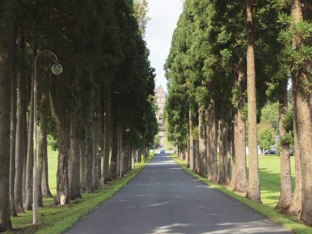トラピスト大修道院並木道