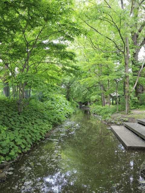 北海道大学 サクシュコトニ川