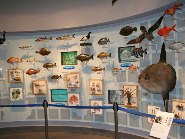 千葉県立中央博物館分館 海の博物館
