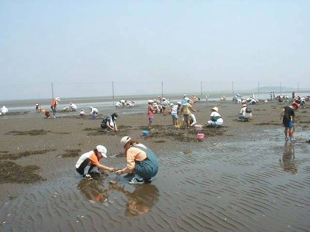 久津間海岸潮干狩り場