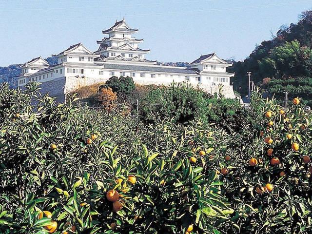 湯浅温泉 湯浅城(日帰り入浴)