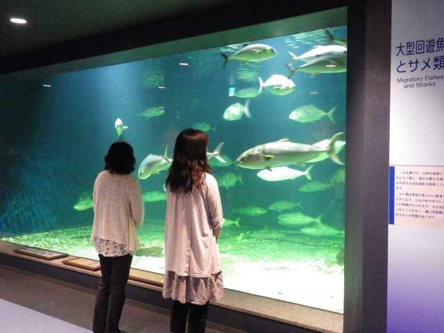 京都大学白浜水族館