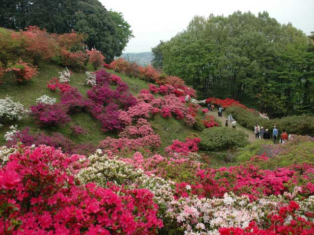五大尊つつじ公園
