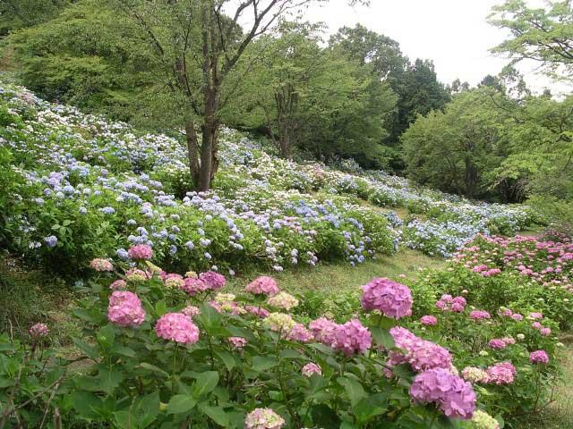 県立美の山公園