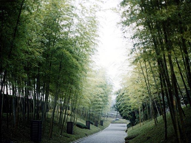 越谷市日本庭園 花田苑