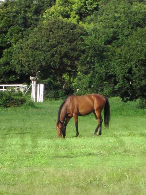 日本乗馬倶楽部