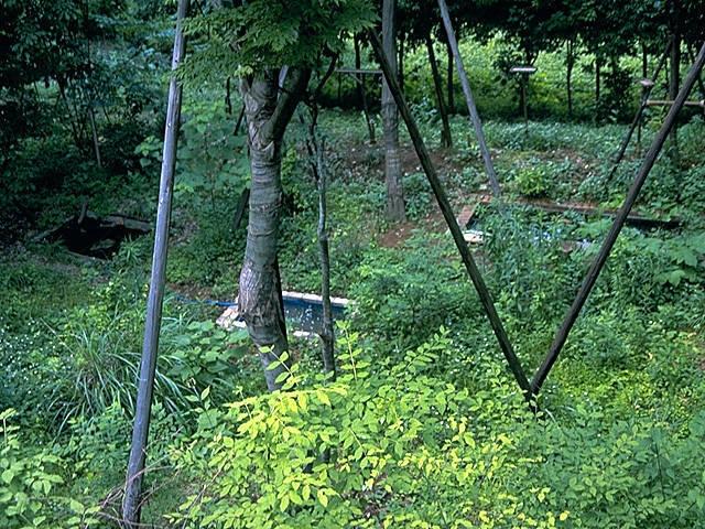 荒幡富士市民の森