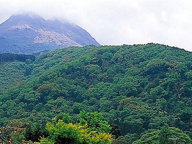 コナラ原生林