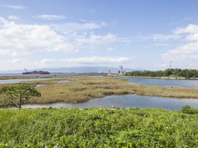 野鳥園臨港緑地