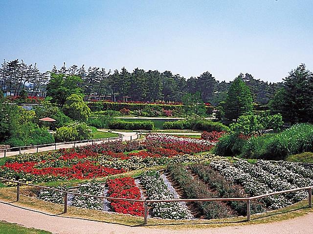浜寺公園「ばら庭園」