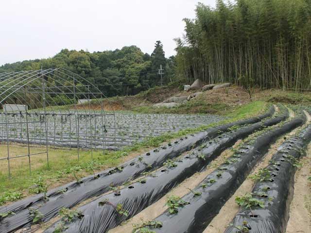 大岩観光農業組合 大岩いも掘り園