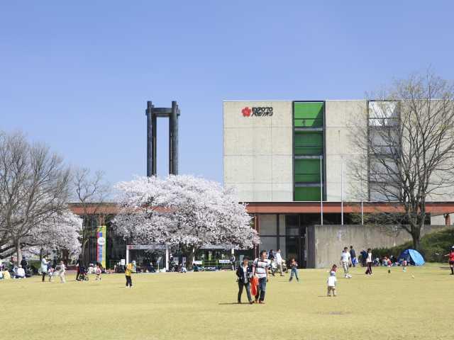 万博記念公園の桜