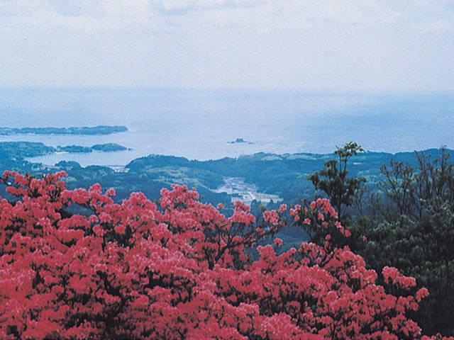 田束山のツツジ