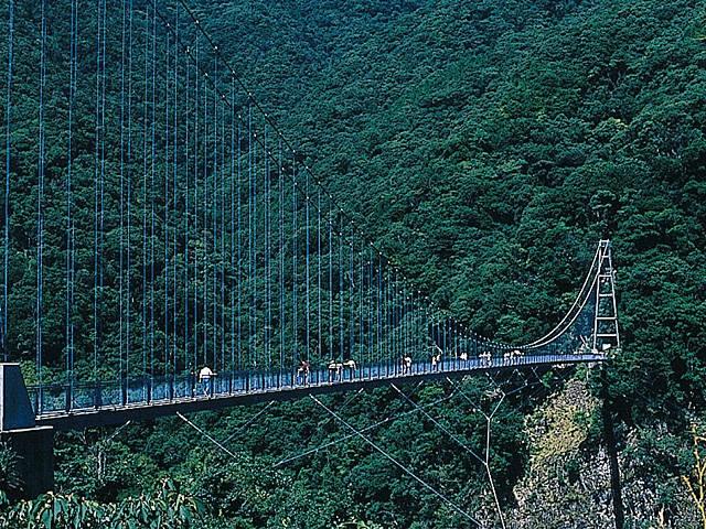 綾の照葉大吊橋周辺のサクラ