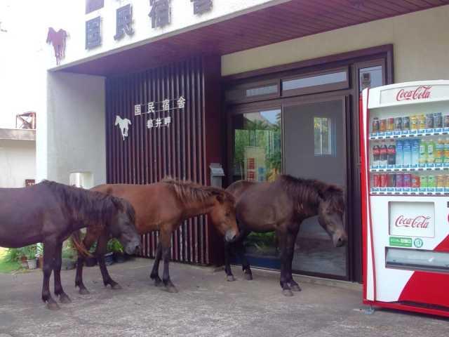 都井岬国民宿舎