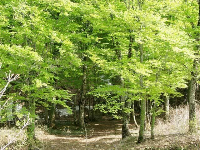 森林セラピー基地「ブナの森温身平」