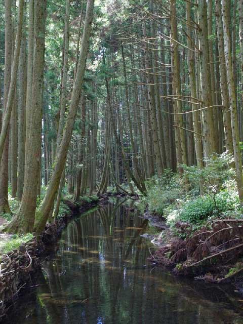 丸池様・牛渡川