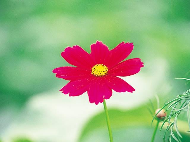 忍野の花畑