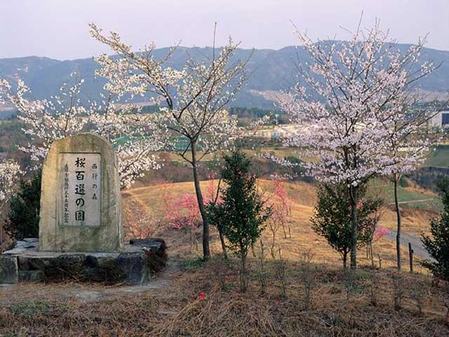 桜百選の園