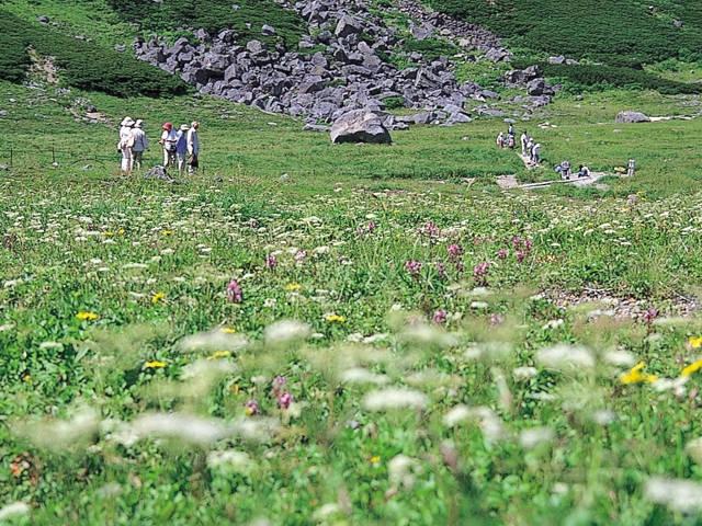 乗鞍岳のお花畑