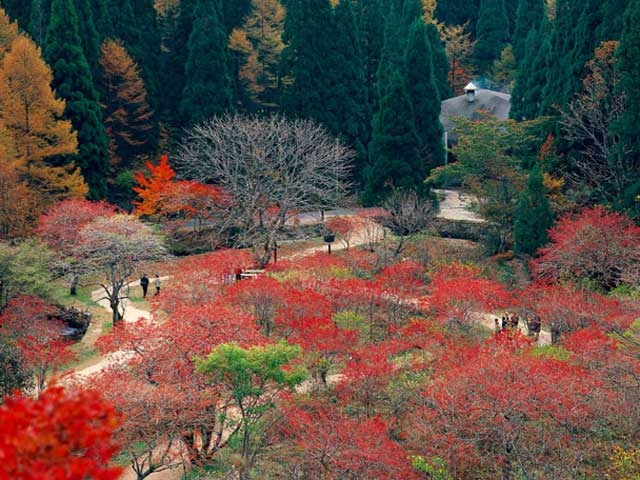 岡山県立森林公園のマルバマンサク