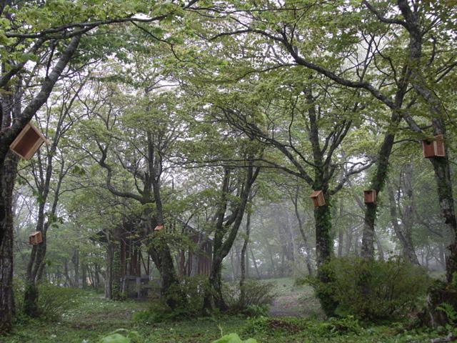 稲庭キャンプ場