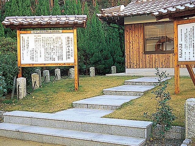 都野津の人麿の松