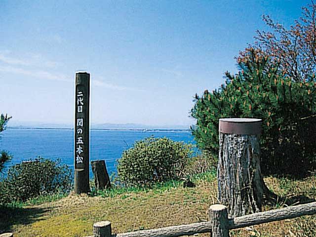 関の五本松(五本松公園)