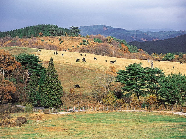 三河高原牧場