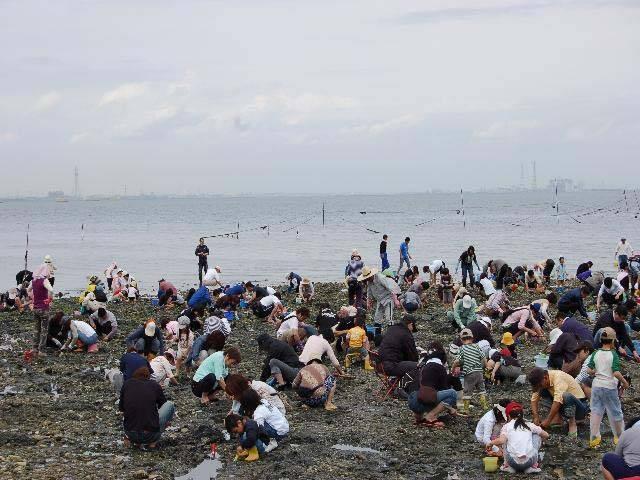 美浜町東海岸(北方・河和口・矢梨) 潮干狩り
