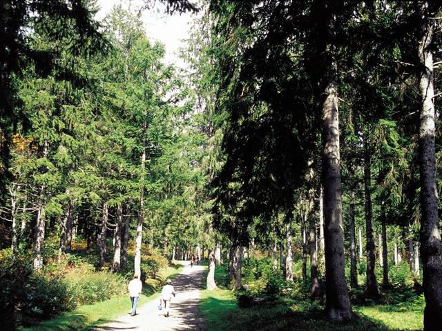 笹ヶ峰 ドイツトウヒの森