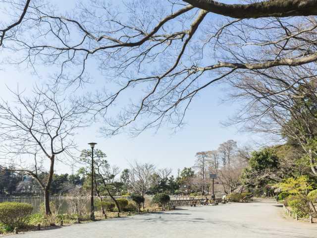 都立 善福寺公園