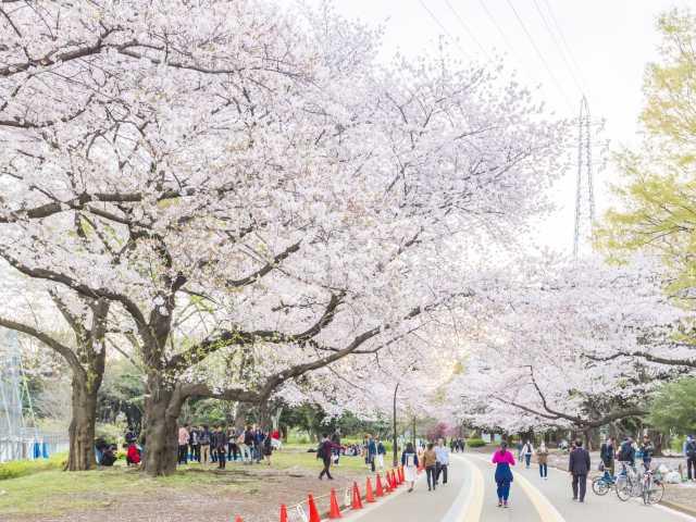 駒沢オリンピック公園の桜