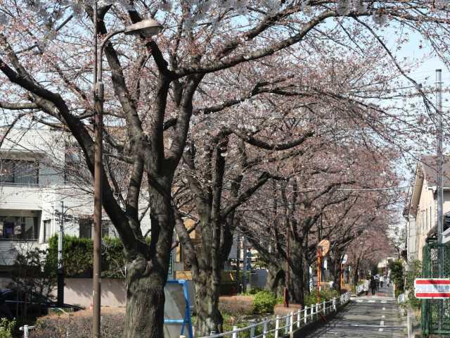 呑川駒沢支流緑道