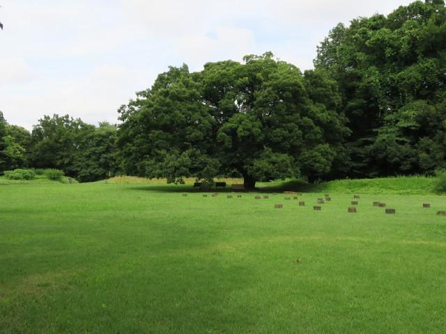 神代植物公園 水生植物園