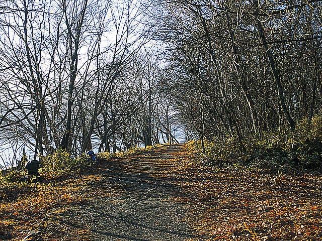 中禅寺湖自然研究路