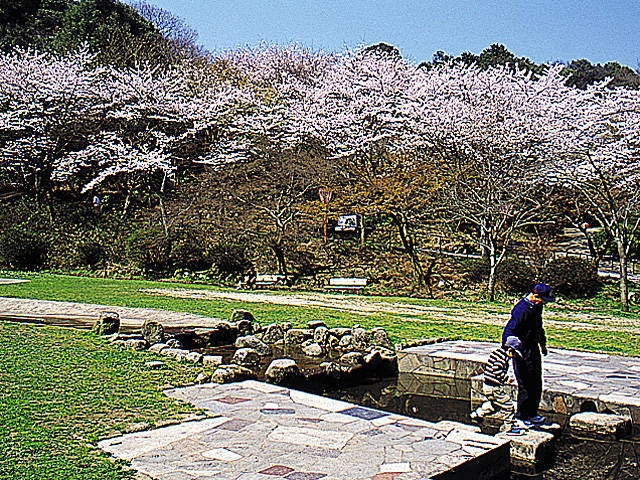 長等公園の桜
