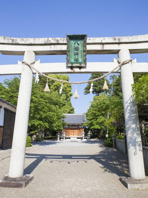 八幡神社の藤