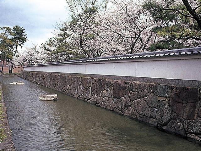 膳所城跡公園の桜