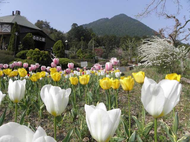 滋賀県立近江富士花緑公園