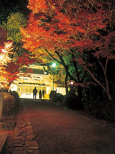 もみじの坂本 秋のライトアップ
