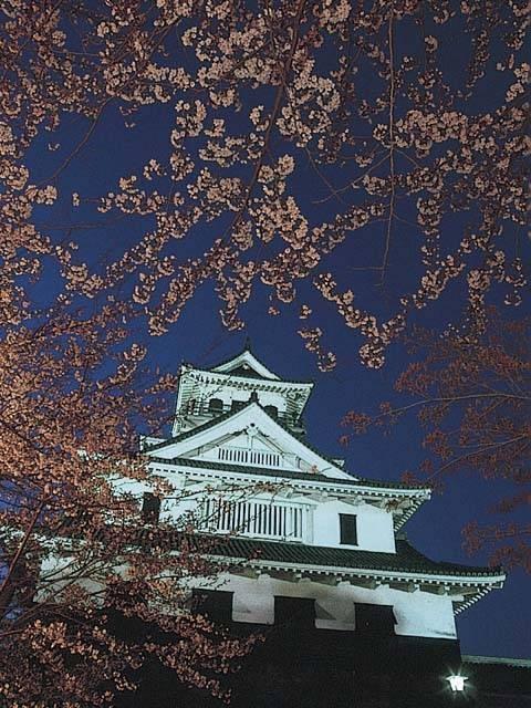豊公園の桜