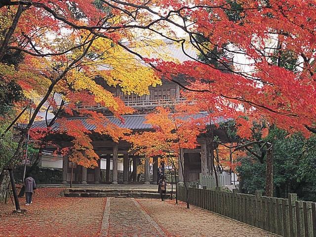 永源寺のカエデ・モミジ